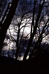 black tree (stefano.graiff) Tags: alberi bosco boschetto valdinon trentino thun