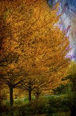 Trees ... (Julie Greg) Tags: autumn autumn2018 texture tree trees grass park england kent sky leafs