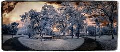 Parc de Mossen Cinto Verdaguer (Ar@lee) Tags: barcelona catalunya photographyinfrared fotografíainfrarroja fullspectrum espectrocompleto trees clouds cielo bordeparafotos filtre720nm ir nikond7000 sky nubes naturaleza orange panorámica paisatges arquitectura red rojo