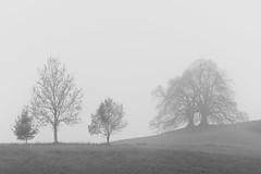 November weather (hjuengst) Tags: november tree bäume nebel fog foggy mist misty cold kalt bavaria bayern ebersberg vogelberg