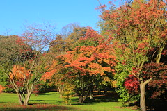 Acer Colours (Dave Roberts3) Tags: autumn fall cardiff wales glamorgan butepark acer maple shadows orange red green leaf leaves