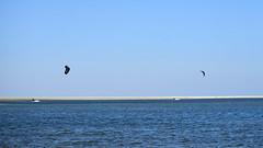 Borkum (Jos Mecklenfeld) Tags: borkum waddenzee noordzee waddensea wattenmeer nordsee northsea sea meer zee beach strand deutschland duitsland sonya6000 sonyilce6000 sonyepz1650mm selp1650 niedersachsen germany de kitesurfen kiteboarding kite kiting kitesurfing surfing