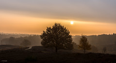 Daybreak Posbank - TKF (Ton Kuyper Fotografie) Tags: posbank gelderland nederland netherlands ochtendgloren daybreak bomen trees sky sunrise