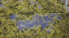 The line between sea and shore, blurred (aerojad) Tags: dji mavic mavicpro dronephotography drone 2018 westernregion iceland is landscape vacation travel wanderlust iceland2018 ytritunga snæfellsnes snæfellsnespeninsula lookdown tidalpool moss autumn october