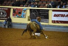 World Championship Barrel Racing Futurity (Andrew Penney Photography) Tags: horses horse barrels barrelracing cowgirl cowboys rider racing okc brf oklahomastatefairgrounds jimnorickarena