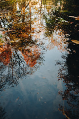 Underwater (matteoguidetti) Tags: trees underwater water reflection colors autumn alberi acqua riflesso colori autunno nature natura