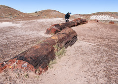 Millions of Years Ago (Ron Drew) Tags: nikon d850 arizona painteddesertpetrifiedforestnationalpark park petrifiedwood autumn desert usa fossil southwest outdoors