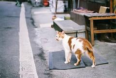 (YL.H) Tags: canon 500n fujifilm superia film analog taiwan 底片 石碇 cat 貓