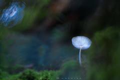Medusa (www.studio360fotografia.es) Tags: setas zeissikonvariotalon70120mm valdeinfierno zeiss olympus omd em10 proyector projector mushroom fungi seta musgo bokeh desenfoque verde color colors colores fantasy fantasia naturaleza nature