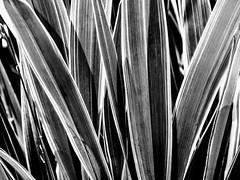 Palms (pmorris73) Tags: arboretum pennstateuniversity statecollege pennsylvania century 2cee 3cee 4cee 5cee 6ca1019 7cb0519 8cc0219