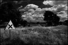 Pezé-le-Robert (Sarthe) (gondardphilippe) Tags: pezélerobert sarthe maine noiretblanc noir nb blanc blackandwhite bw black white arbres campagne ciel clouds byebyeflickr extérieur field graphique herbes sky landscape monochrome macro nature nuages outdoor paysage quiet rural texture ruralité zen