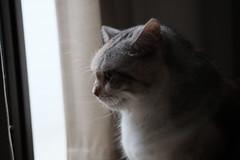 (冰冷熱帶魚) Tags: fujifilm xpro2 xf50mm digital tatami cat