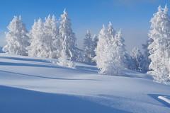 Hinterstoder (Chrifrie) Tags: winter schnee snow bäume trees snowfield ice frost visitaustria pyhrnpriel upperaustria