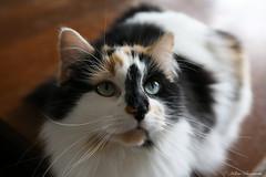 IMG_2059-1 (Helene Bassaraba) Tags: coth5 bestofcats catmoments