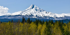 Mount Hood, Oregon (maytag97) Tags: maytag97 nikon d750 hood mount oregon white mountain view nature mt sky ski travel landscape scenic northwest blue beauty usa season outdoors tourism snow recreation trees majestic pacific cascade beautiful slopes spring outdoor clean forest mountainside tree