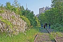 8787 - PARIS 12 - LA PETITE CEINTURE (mimi.deparis21) Tags: paris petiteceinture voie ferrée rail arbres fleurs promeneurs railway abandoned tree flowers abandonedrailway