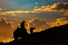 When the camel rest (Ashraf T Hashem) Tags: nikon animal desert egypt sunset goldsky sky camel goldenhour hill silhouettes