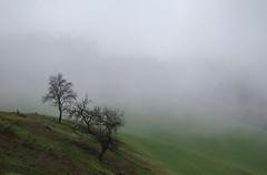 STYRIAN FOG (LitterART) Tags: fog nebel autum herbst obstbäume sony wiese meadow mood stimmung