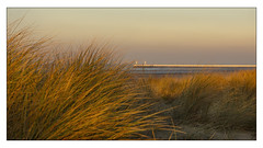 Nieuwpoort 20102019 (binnenvaartfotografie.be) Tags: nieuwpoort belgium sea dunes gras evening light water color nikon7200