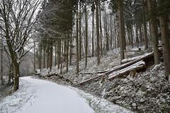 En ces mois d'hiver (Excalibur67) Tags: nikon d750 sigma globalvision art arbres trees forest foréts nature neige snow 24105f4dgoshsma chemin vosgesdunord