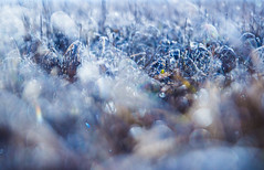 Tiny moments (Pan.Ioan) Tags: nature outdoors leaf grass blue morning field plant beauty beautiful selective focus fragility vulnerability frozen winter cold