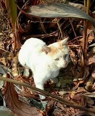 It's Fine Outside (Zohaib Usman (1M Thanks)) Tags: cat cats catsandpets catslovers catlovers kitty hellokitty cutekitty kitten cutecats loveofcats homelesscat catswelove catphotos catsandanimals catsandkittens zohaibusmanphotography