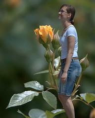Rose's Dream (Scott 97006) Tags: rose yellow plant bokeh woman female lady shorts flower