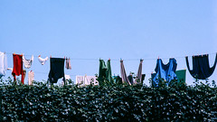 Panni stesi (giorgiorodano46) Tags: monterado marche italy settembre1978 september 1976 giorgiorodano bucato pannistesi laundry