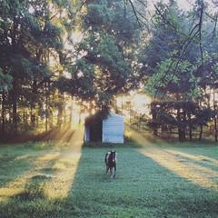 Morning rays (jessalynn_sammons) Tags: iphone pet barn shed morning mist fog rays light miniaturehorse horse