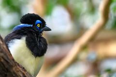 Side face (Rico the noob) Tags: dof bokeh d850 closeup switzerland 70200mmf28 animal zurich published schweiz birds bird 2018 70200mm animals eye indoor nature zoo