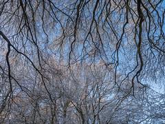 Watlington Hill (Bruce Clarke) Tags: olympus landscape nt zuikodigital outdoor cold 1260mm trees zd m43 chilterns thamesvalley winter beeches nationaltrust sunset oxfordshire omdem1 watlingtonhill branches dusk snow