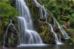 Owharoa Falls (Tjaldur66) Tags: newzealand northisland coromandel longtimeexposure nature green ferntrees hdr tonemapping