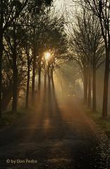 s-morgens-vroeg (Don Pedro de Carrion de los Condes !) Tags: donpedro d700 morgens sunrise weg lichtbanen boom herfstig sfeer klinkerweg tegenlicht zon stralen nijkerk slichtenhorst