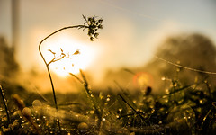 Morning moments (Pan.Ioan) Tags: nature plant outdoors dew morning sunlight colorful