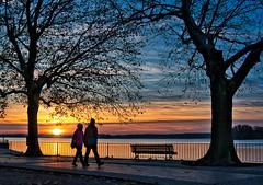 Winter walk (Sabine.R) Tags: berlin tegel winter greenwichpromenade reinickendorf sonnenuntergang