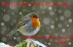 xmas 2018 (Sybalan,) Tags: merrychristmas happynewyear robin wildlife westcoast festive greetings