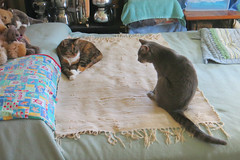 Gracie and Millie 19 September 2018 0976Ri 4x6 (edgarandron - Busy!) Tags: cat cats kitty kitties tabby tabbies cute feline gracie patchedtabby millie graytabby