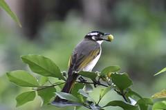 #nikon#d5600#bird# (evanlin0722) Tags: nikon d5600 bird