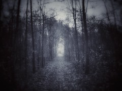 I found myself within a forest dark... (undefinable moods) Tags: trees blackforest forest woods path way dark darkness landscape outside outdoor countryside wilderness lost blackwhite bnw monochrome spooky moody creepy atmosphere