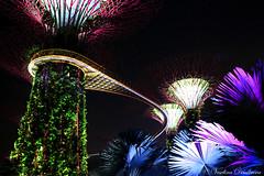 Supertree Grove, Marina Bay, Singapore (Veselina Dimitrova) Tags: outside greatphotographers clickthecamera clickcamera photography photooftheday pictureoftheday picoftheday bestoftheday beautiful colourful lights nightphotography nightphoto singapore marinabay supertree palm trees