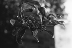 Analog black and white 1 (Nika Polovina) Tags: analog photography black white blackandwhitephotography flower nature beauty tree university unitedkingdom ipswich