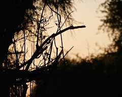Tree Dusk (Leigha Louisee) Tags: nature silhouette branches branch tree trees orange sunset dusk
