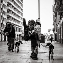 on the move (Gerard Koopen) Tags: spanje spain espana malaga city urban people man woman dog walkingthedog onthemove outfit fashion straat street straatfotografie streetphotography streetlife bw blackandwhite blackandwhiteonly sony sonyalpha a7iii 2018 gerardkoopen gerardkoopenphotography littledoglaughednoiret