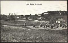 Postkort fra Agder (Avtrykket) Tags: bolighus hus høysåte kraftlinje mann postkort uthus vei arendal austagder norway nor