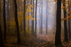 No winter here today (Petr Sýkora) Tags: les mlha podzim forest nature fog autumn atmosphere czech