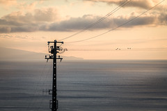Staves (Mopple Labalaine) Tags: açores portugal pt azores birds line staves sunset water atlantic ocean evening light