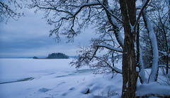 Winter (Joni Mansikka) Tags: winter nature outdoor snowy tree branches landscape sauvo suomi finland tamronsp2470mmf28divcusd