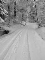 Winter (Toni_V) Tags: iphone apple xr iphoneography winter uetliberg schnee snow hiking wanderung randonnée escursione zürich zurich bw blackwhite schwarzweiss monochrome wald forest wood switzerland schweiz suisse svizzera svizra europe ©toniv 2019 190203 sundaymorningphototour