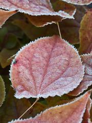 Raureif (lebastian) Tags: panasonic dmcgx8 olympus m60mm f28 macro raureif herbst