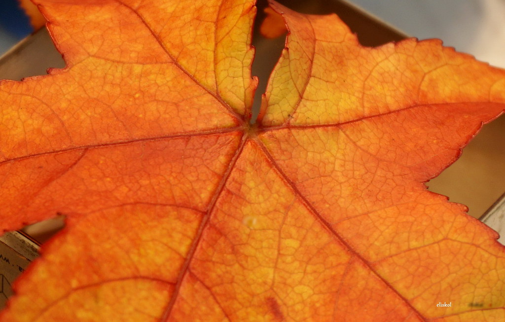 The World S Best Photos Of Herbst And Herbstblatt Flickr Hive Mind